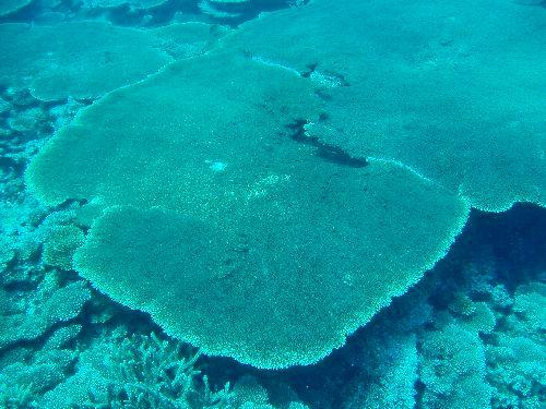 珊瑚.jpg